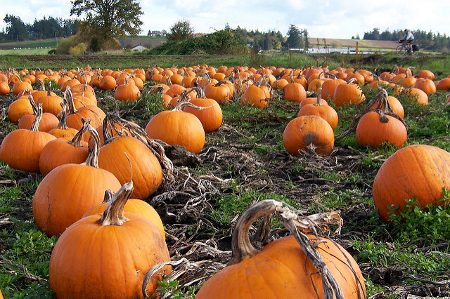 Top Pumpkin Patches in Houston